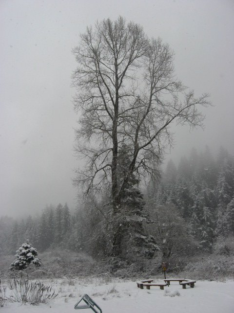 Goldstream BC Provincial Park